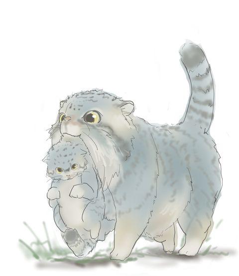 マヌルネコoomのイラスト Pixiv マヌルネコ Pallas Cat