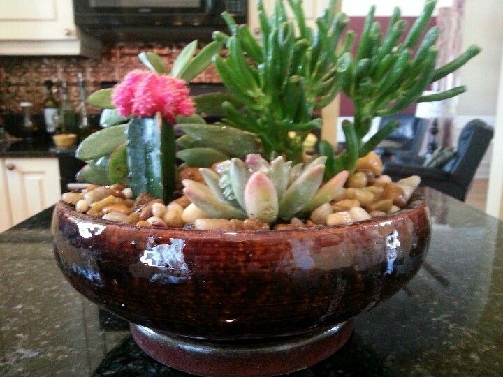Awesome Indoor Cactus Garden Ideas Part - 10: Indoor Cactus Garden