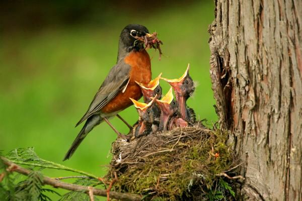 Mama bird feeding her babies | Beautiful birds, Mother and baby animals,  Animals