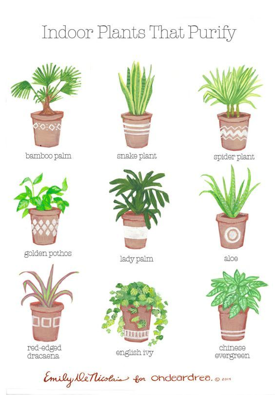 Simple Natural Living The Best Air Purifying Plants For Your Home