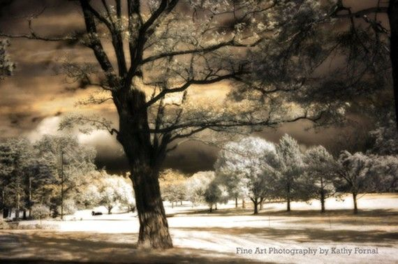 Nature Trees Fine Art Photography Gothic Landscape Surreal Trees Fine Art Photograph 8 X 12