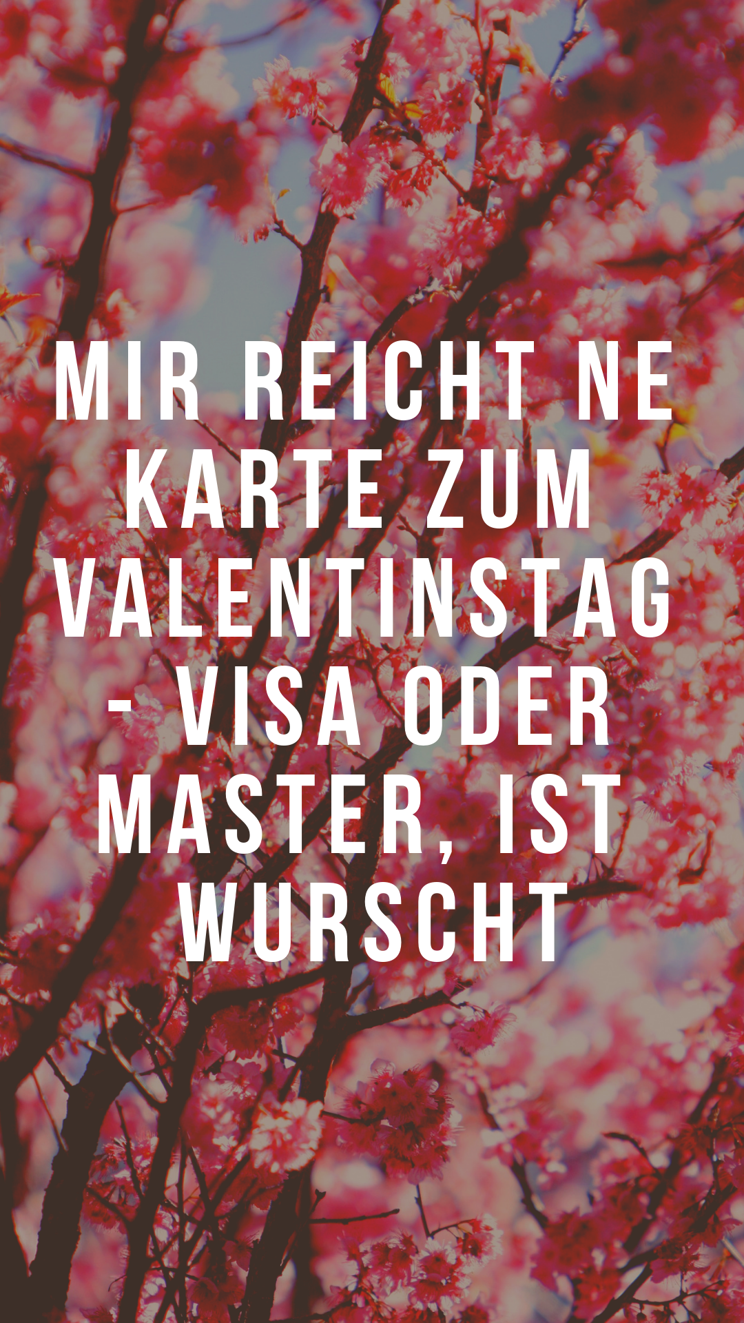 Hier findest du lustige Sprüche zum Valentinstag. Achtung Ironie und Sarkasmus inklusive - viel Spass beim Lesen.