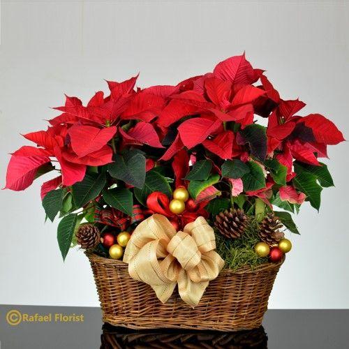 Red Poinsettia Plants In Wicker Basket Christmas Flower Arrangements Basket Flower Arrangements Poinsettia Plant