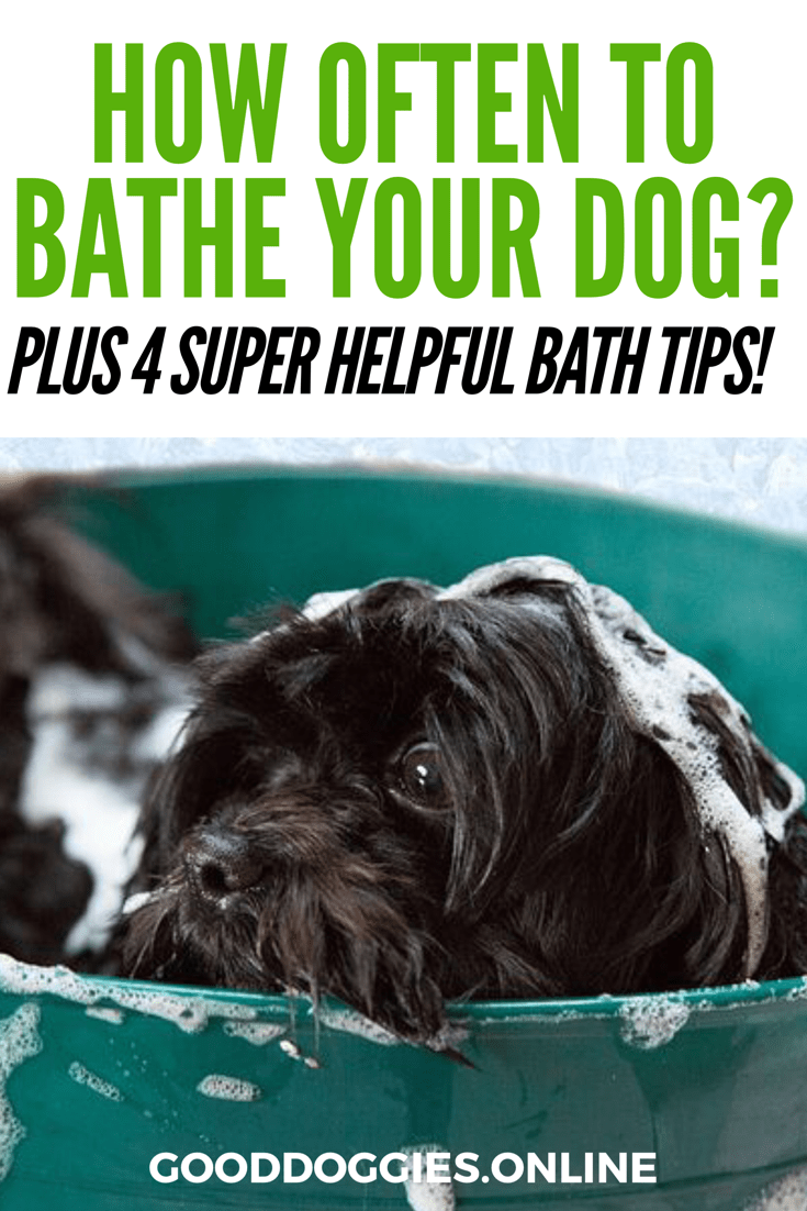 How Often to Bathe a Dog Dogs, Obedience school for dogs