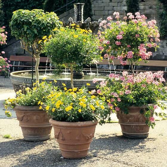 Der dekorative Übertopf schafft Atmosphäre und präsentiert die Pflanze von ihrer schönsten Seite. #beetanlegen
