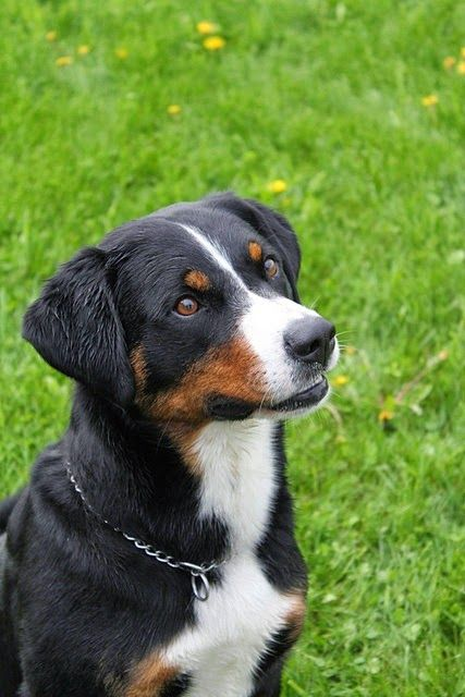 Top 05 Awesome Dog Breeds Cute Dogs And Cats Hondenrassen