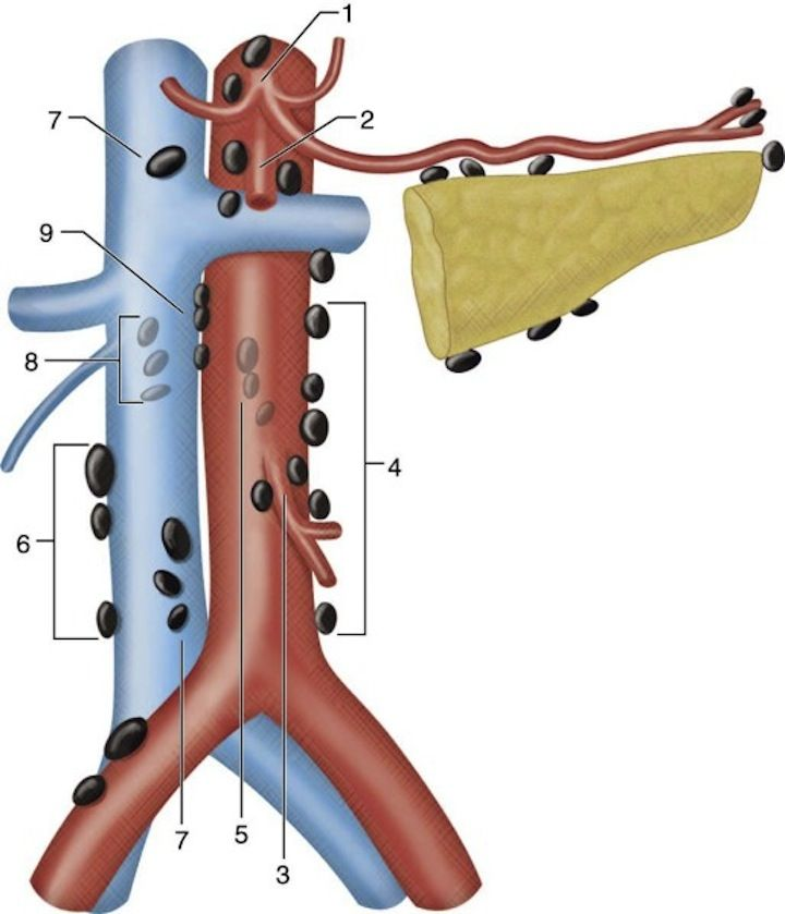 Illustration of the retroperitoneum depicting the ...