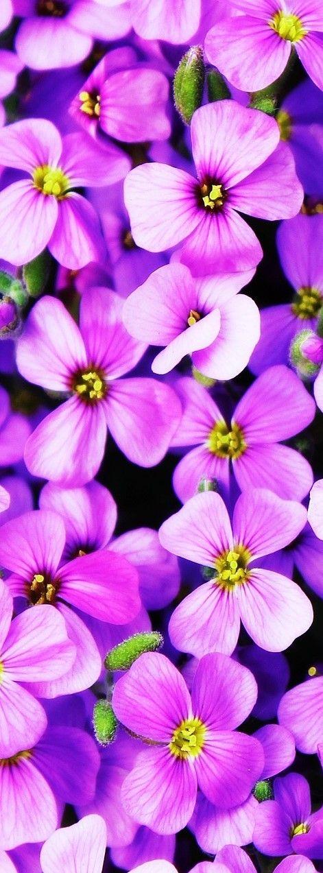 20 Dark Purple Flowers