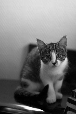 Sweet #Cat. ♥