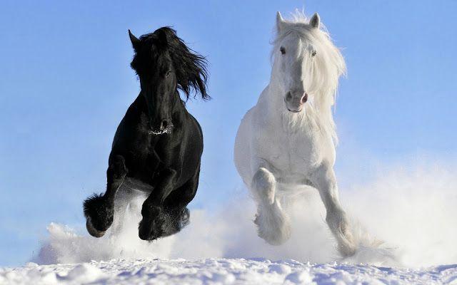 winter foto mit pferde im schnee pferde pinterest. Black Bedroom Furniture Sets. Home Design Ideas