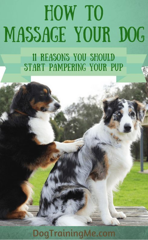 How To Massage Your Dog Psychiatric Service Dog Dog Care Tips Dogs