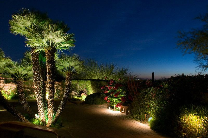 commercial landscaping with palms