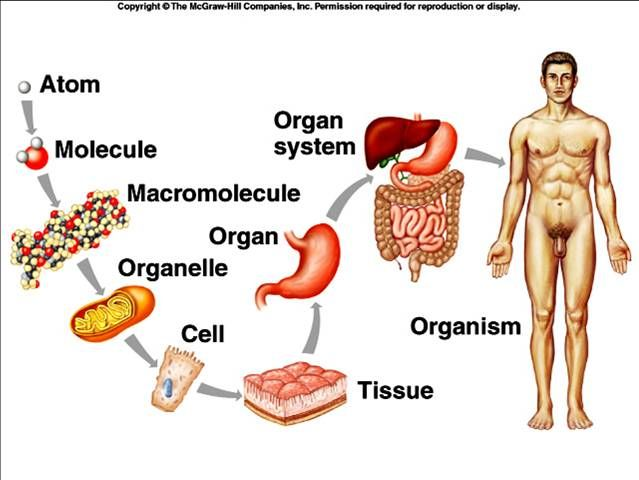 Online anatomy and physiology Order here or become a distributor and ...