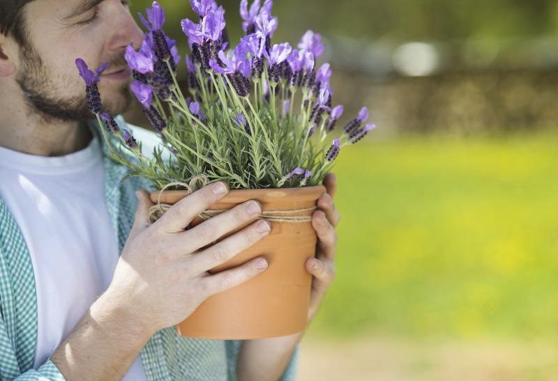 how to grow lavender in a pot gardening growing lavender lavender plant care indoor. Black Bedroom Furniture Sets. Home Design Ideas