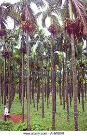 Resultado de imagem para Xishuangbanna Tropical Botanic Garden