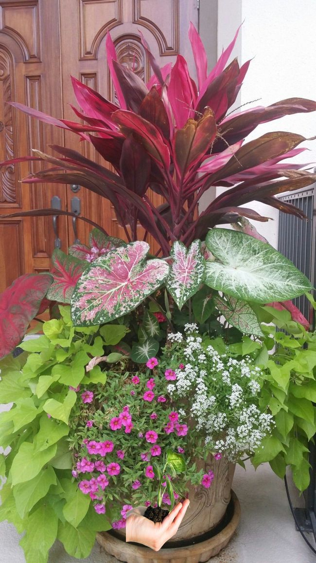 Tropical Planters I Made Pools Pinterest Container