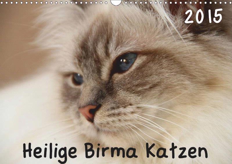 Birma Katzen Kalender