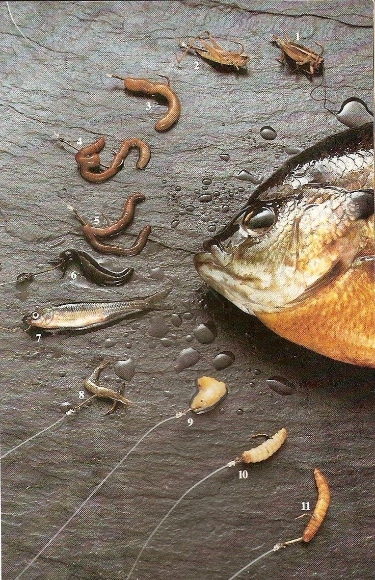 Fishing tips fox lake fishing blue gill perch fishing for Best worms for fishing