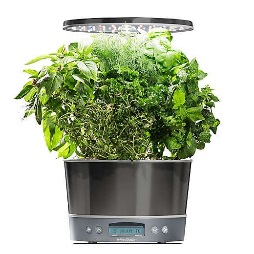 Aerogarden® Harvest Elite 360 Garden System Herbs Herb 640 x 480