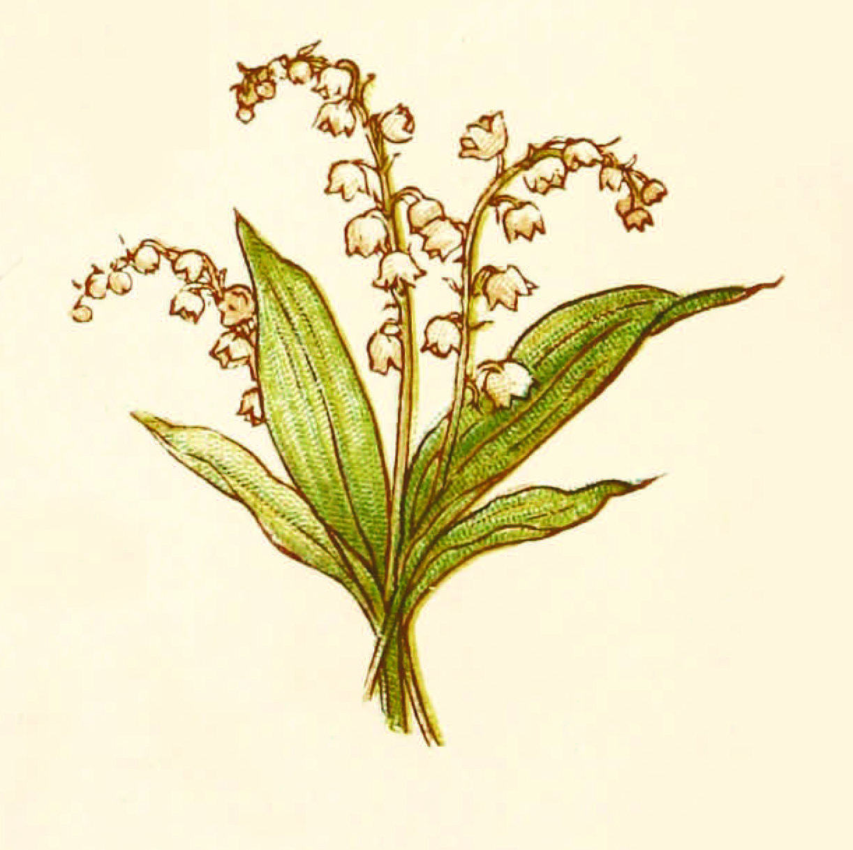 Language of flowers illustrated by kate greenaway 빈티지