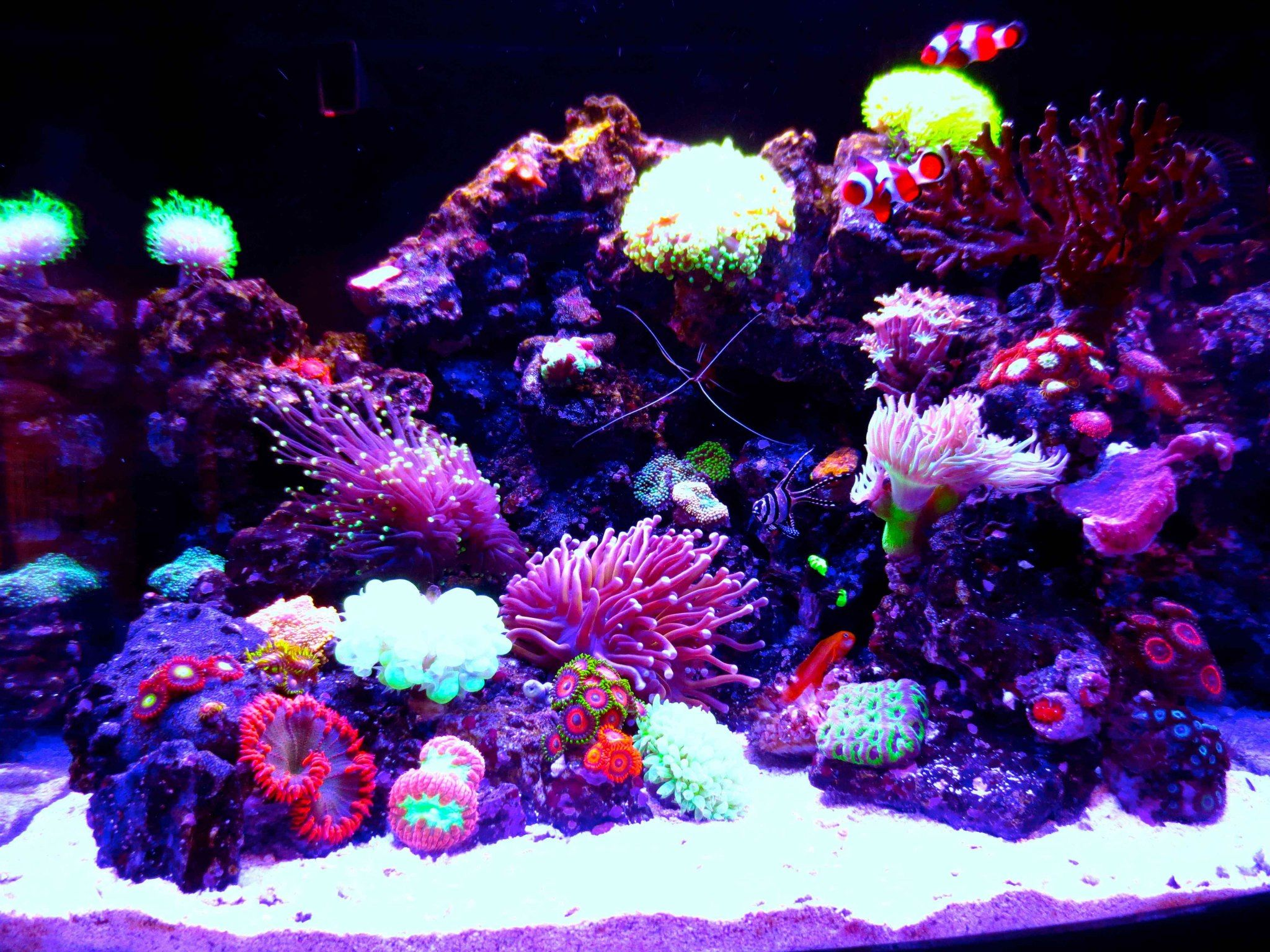 Saltwater aquarium - Check Out My Coral Reef Saltwater Tank Nano Aquarium Http Youtu