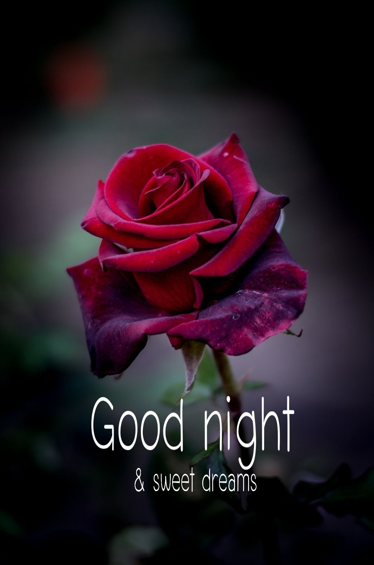 Image result for good good night tags
