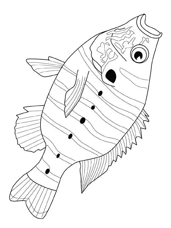 ausmalbilder fische angeln
