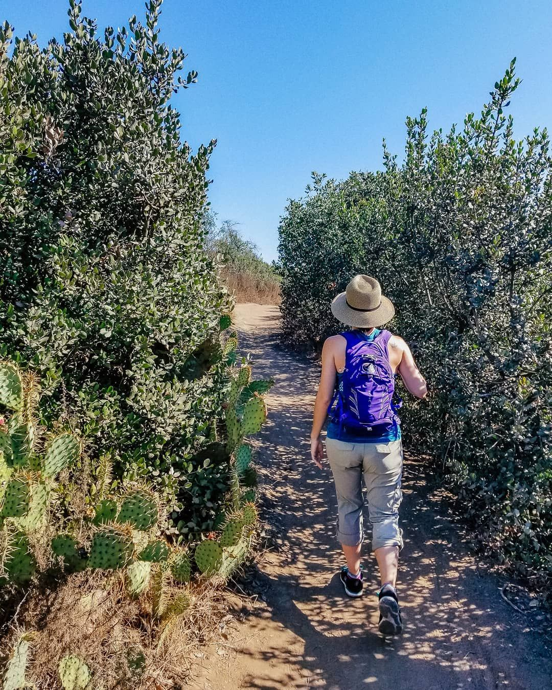 Hiking at Aliso and Wood Canyons Wilderness Park in Orange County, California | California Hiking | California travel, California hikes, Hiking spots