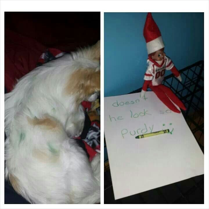 Elf decorating the dog