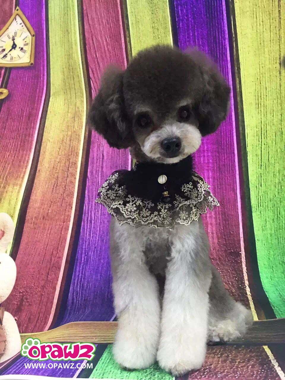 Opawz Pet Lace Collar Dog Collar Lace Pet Collar Designer Dog