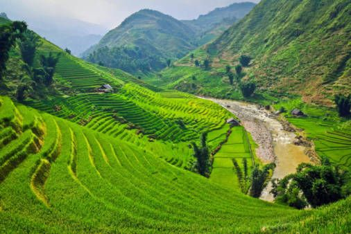 Scorpione, Vietnam