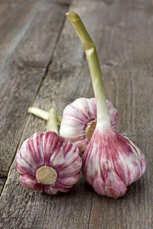 die besten 25 zwiebel pflanzen ideen auf pinterest osterbasteln glas tulpen blumen und. Black Bedroom Furniture Sets. Home Design Ideas
