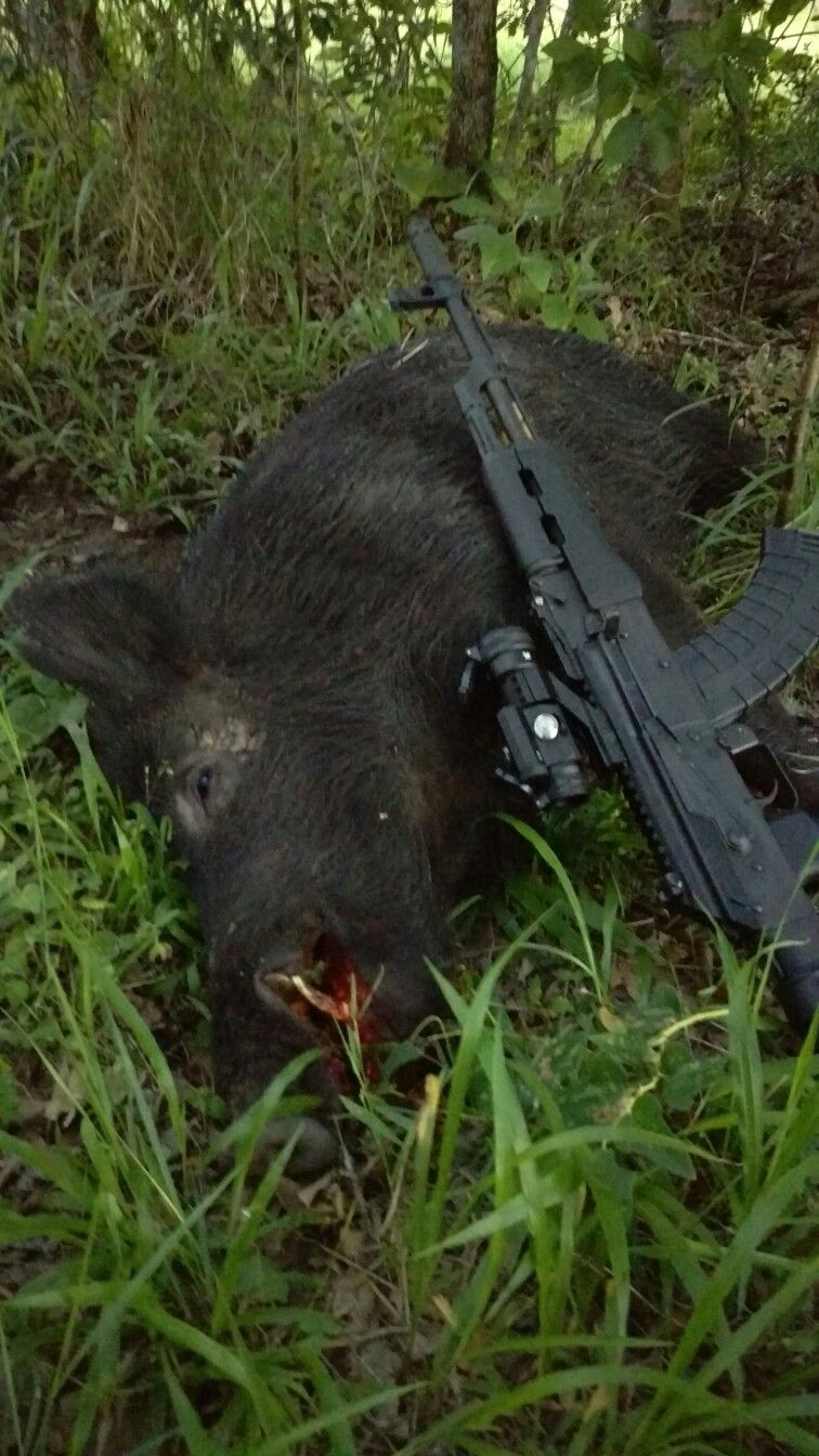 South Texas Boar.. Taken with a WASR 10.. Good Times!