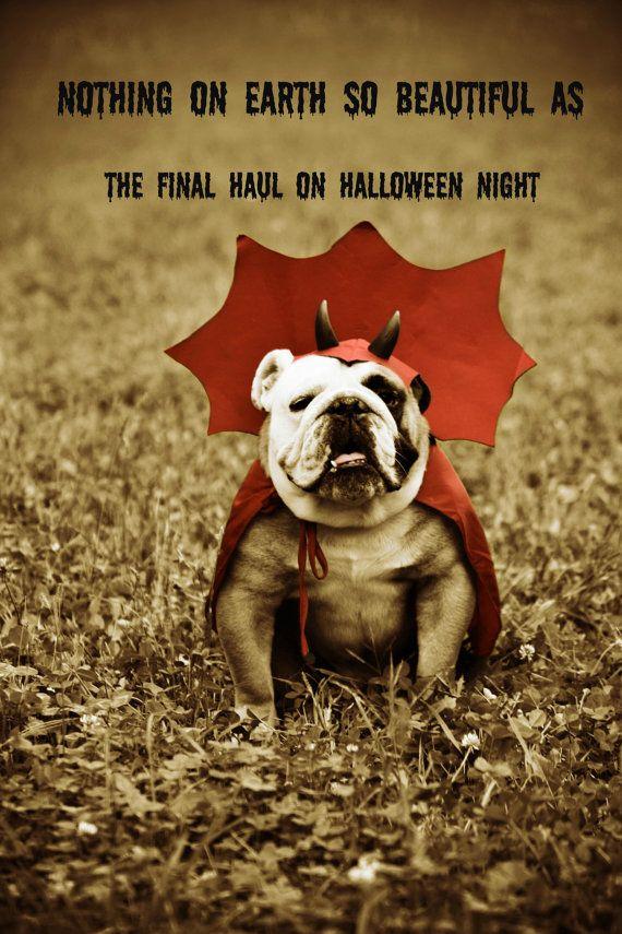 ENGLISH BULLDOG HALLOWEEN | Final Haul 5 x 7 English Devil Bulldog ...