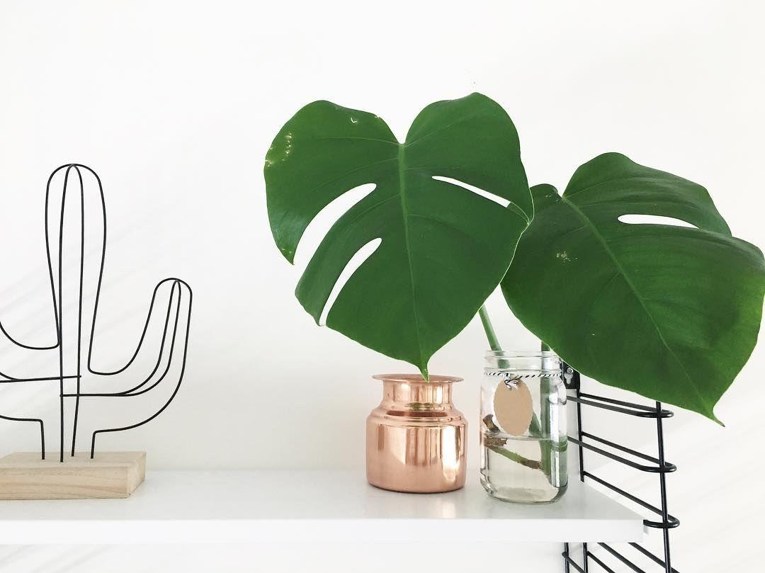 #kwantuminhuis DRAADCACTUS > https://www.kwantum.nl/wonen/woondecoratie @jessjitske #kwantum #cactus #accessoires #woondecoratie #interieur