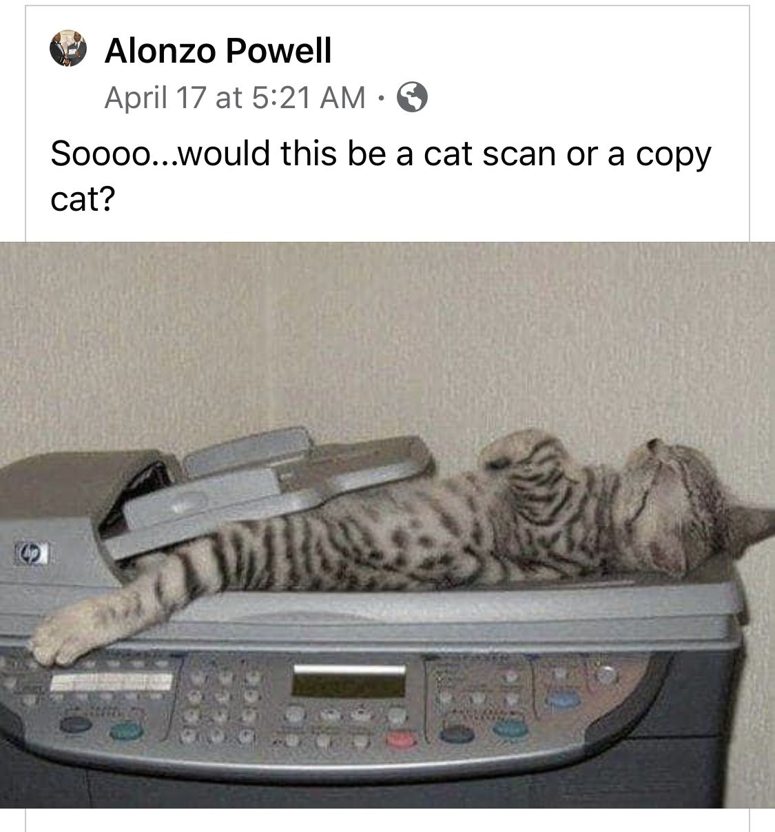 Pin by buster boyce on caaaaats funny animals cat scan