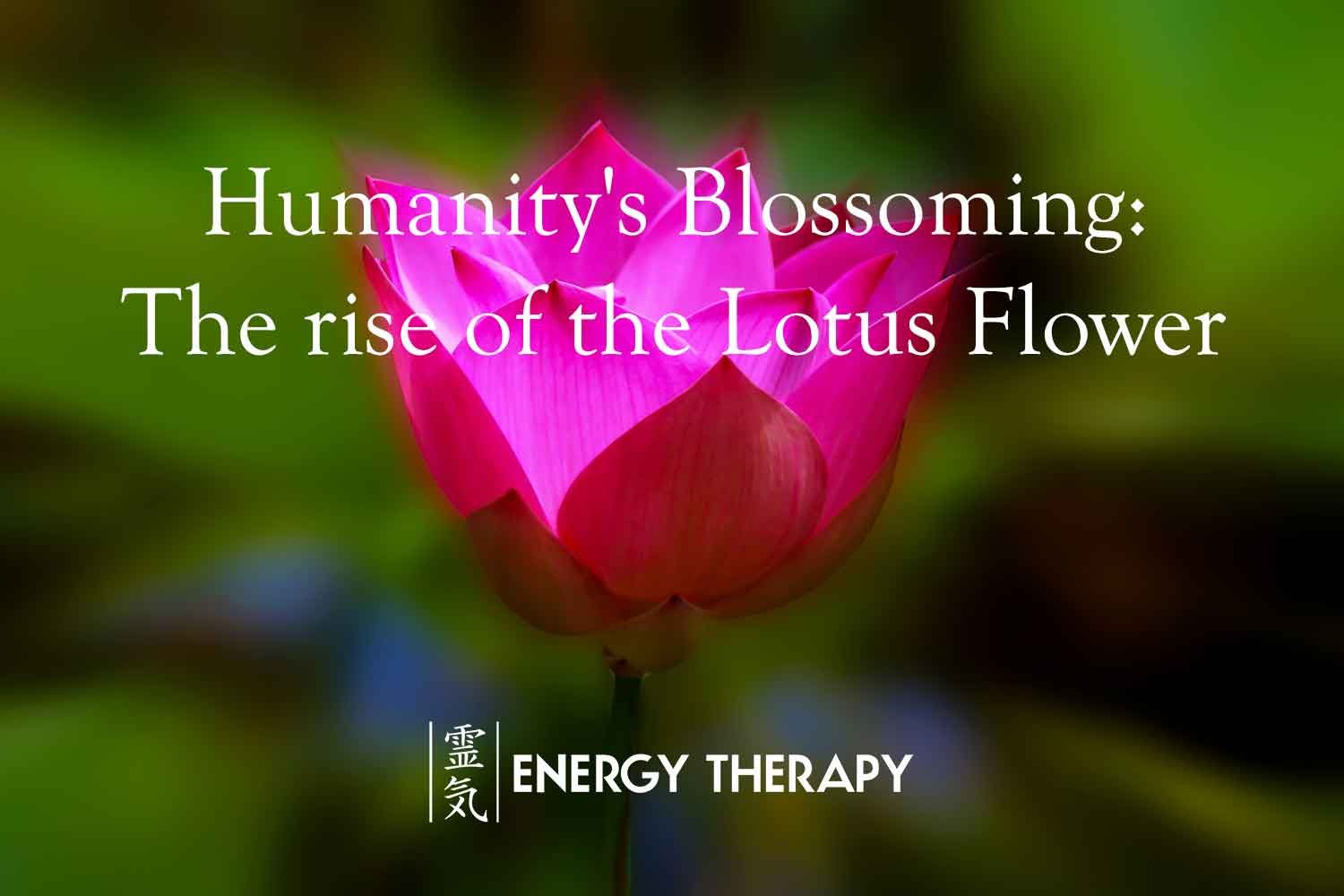 Humanitys blossoming the rise of the lotus flower info humanitys blossoming the rise of the lotus flower izmirmasajfo