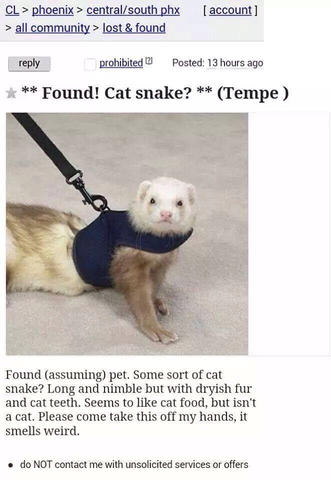 Cat Snake Funny Ferrets Cat Memes Found Cat