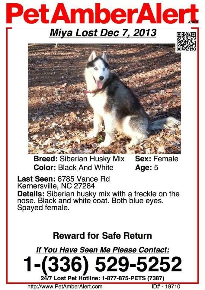 Pet Amber Alert Lost Black White Female Siberian Husky