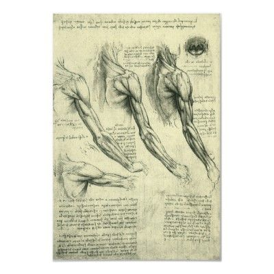 Arm And Shoulder Anatomy By Leonardo Da Vinci Poster Year 8