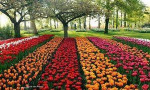 موضوع تعبير عن فصل الربيع وجماله بالعناصر Beautiful Flowers Garden Beautiful Gardens Tulip Fields Netherlands