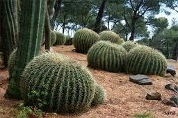 cactus_flores - Buscar con Google
