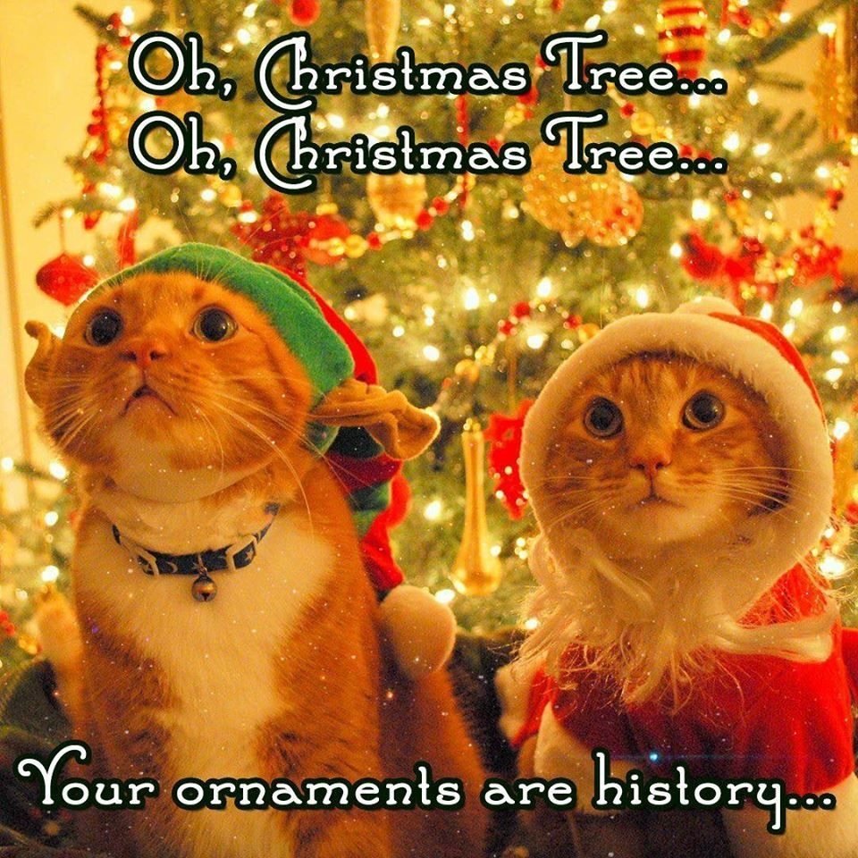 Oh Christmas Tree Oh Christmas Tree Your Ornaments Are History Christmas Merry Christmas Chri Funny Christmas Pictures Christmas Humor Christmas Memes Funny