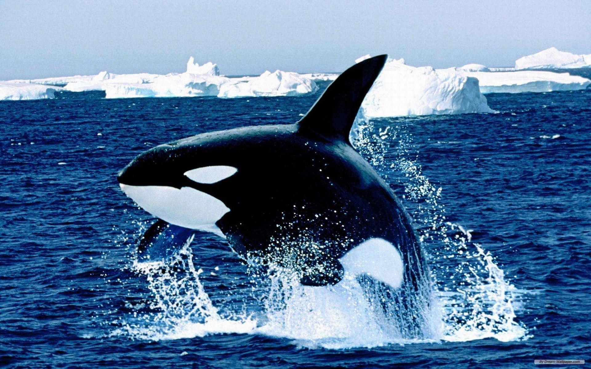 Free Wallpaper - Free Animal wallpaper - Marine life 1 wallpaper ...
