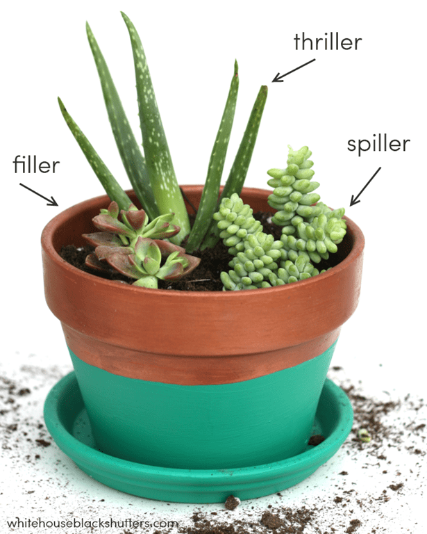 The Right Way To Make A Succulent Garden And Tutorial On How This Color Blocked Planter