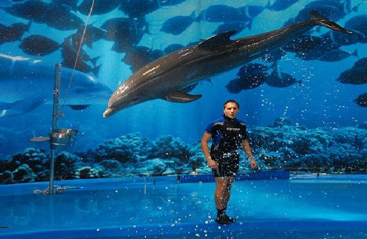 Top Attraction In Spain Barcelona Zoo