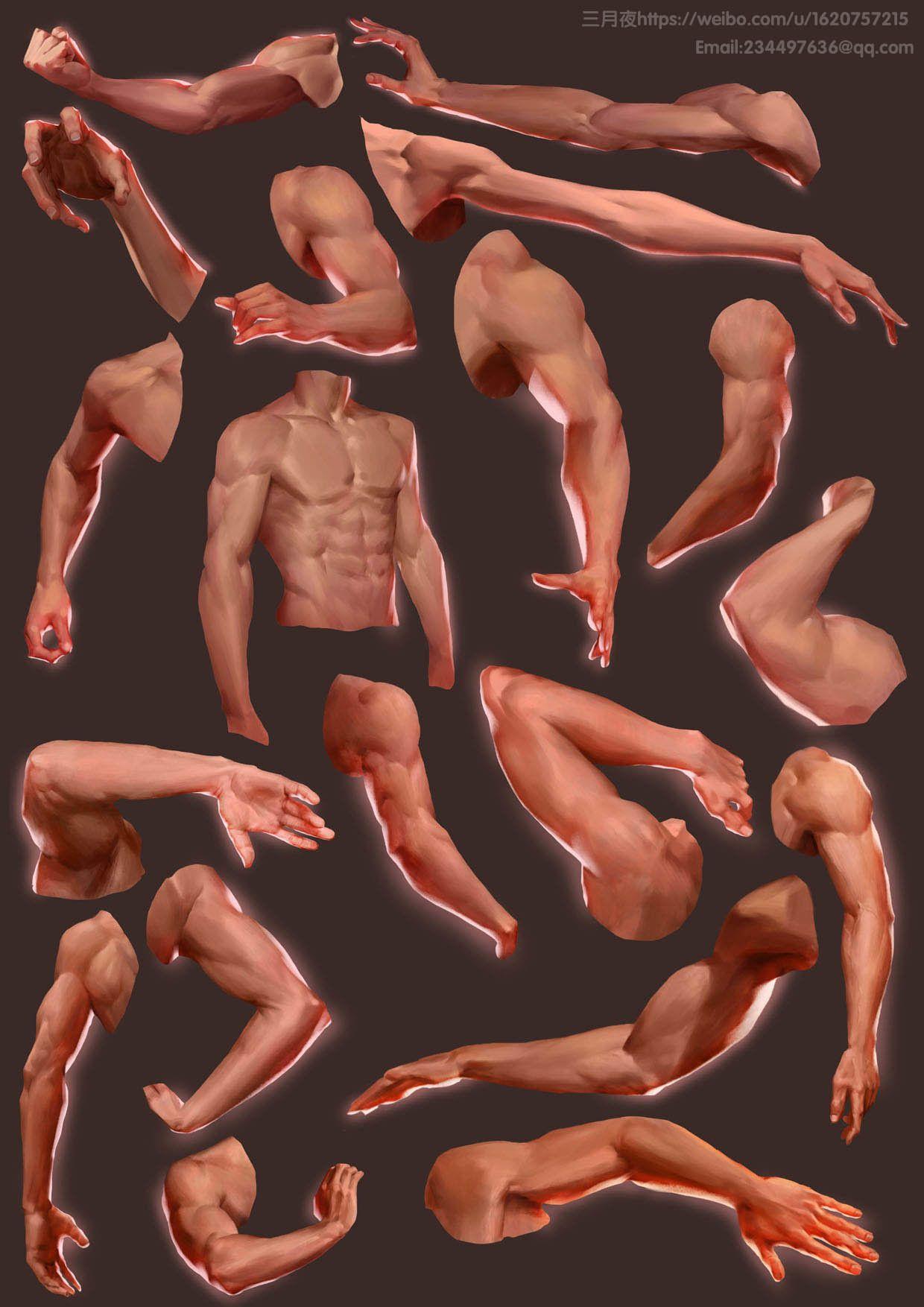 ArtStation - arms, Qi Chen   Anatomía masculina   Pinterest ...