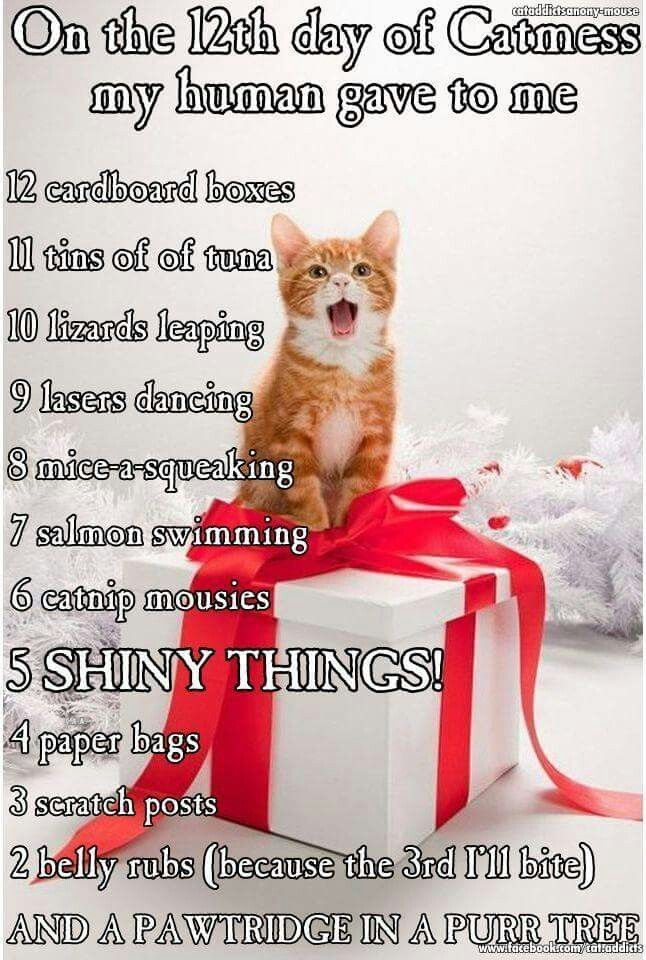 21 Cat Reactions For Every Christmas Situation | Christmas morning ...