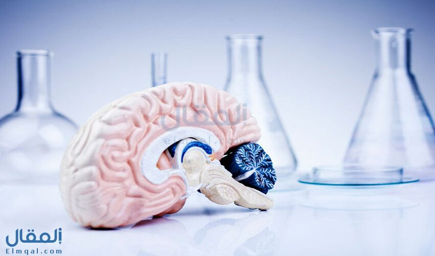 تعرف على المخيخ ووظيفته في الجسم Brain Tumor Tumor Spinal Fluid