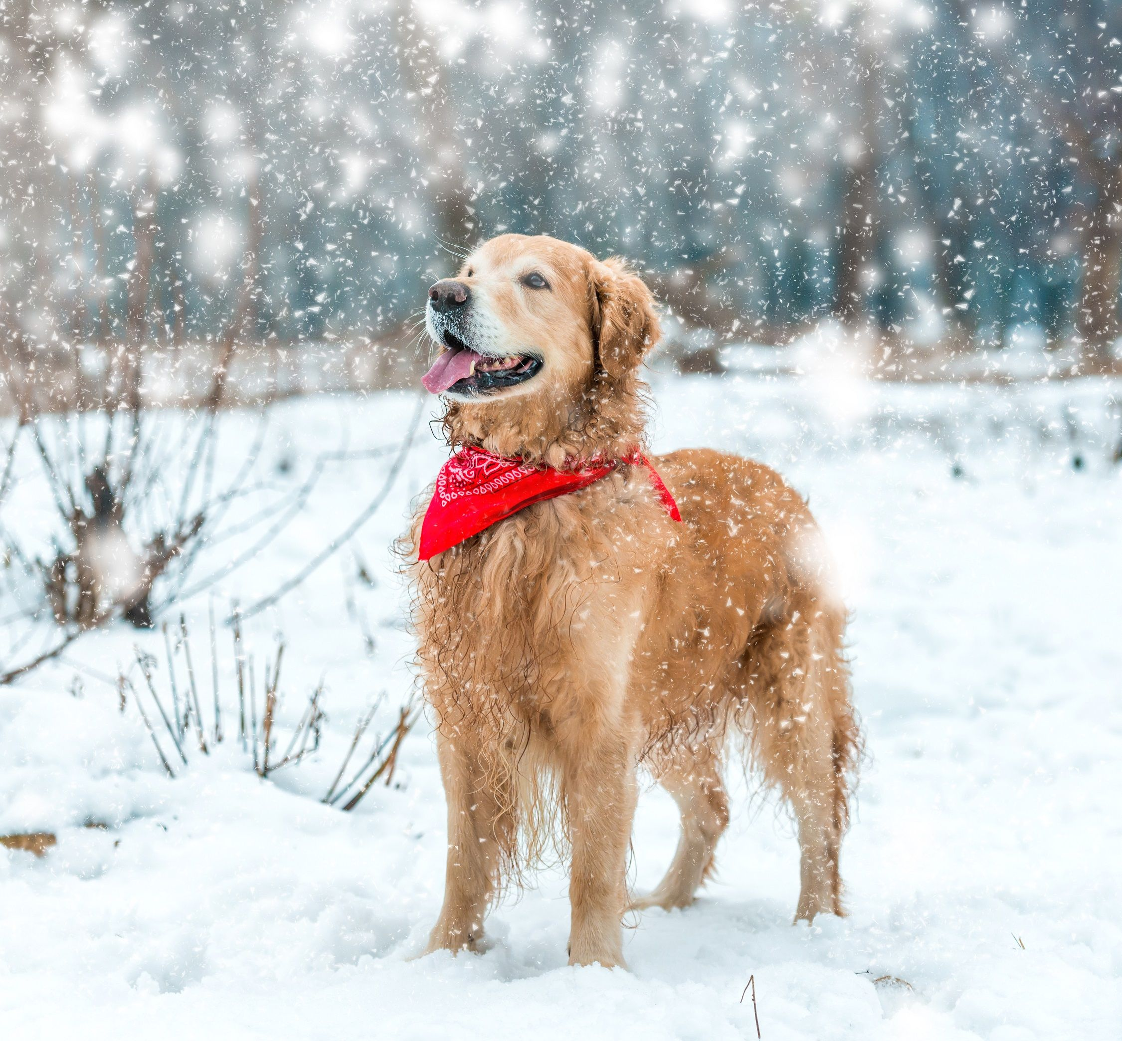 6 Tips For Beating Itchy Winter Skin Dog Itching Dog Care Pets